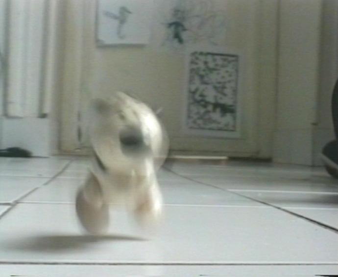 1 saut de chien 0